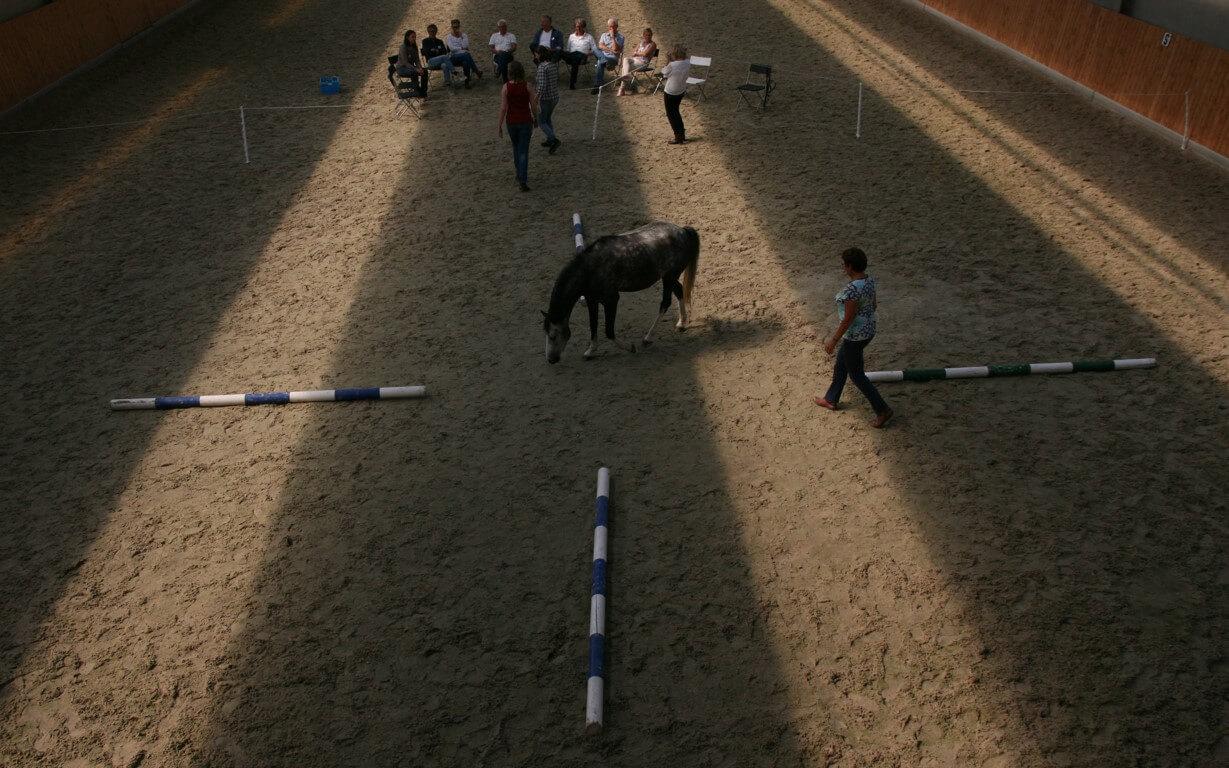 Methoden paardencoaching