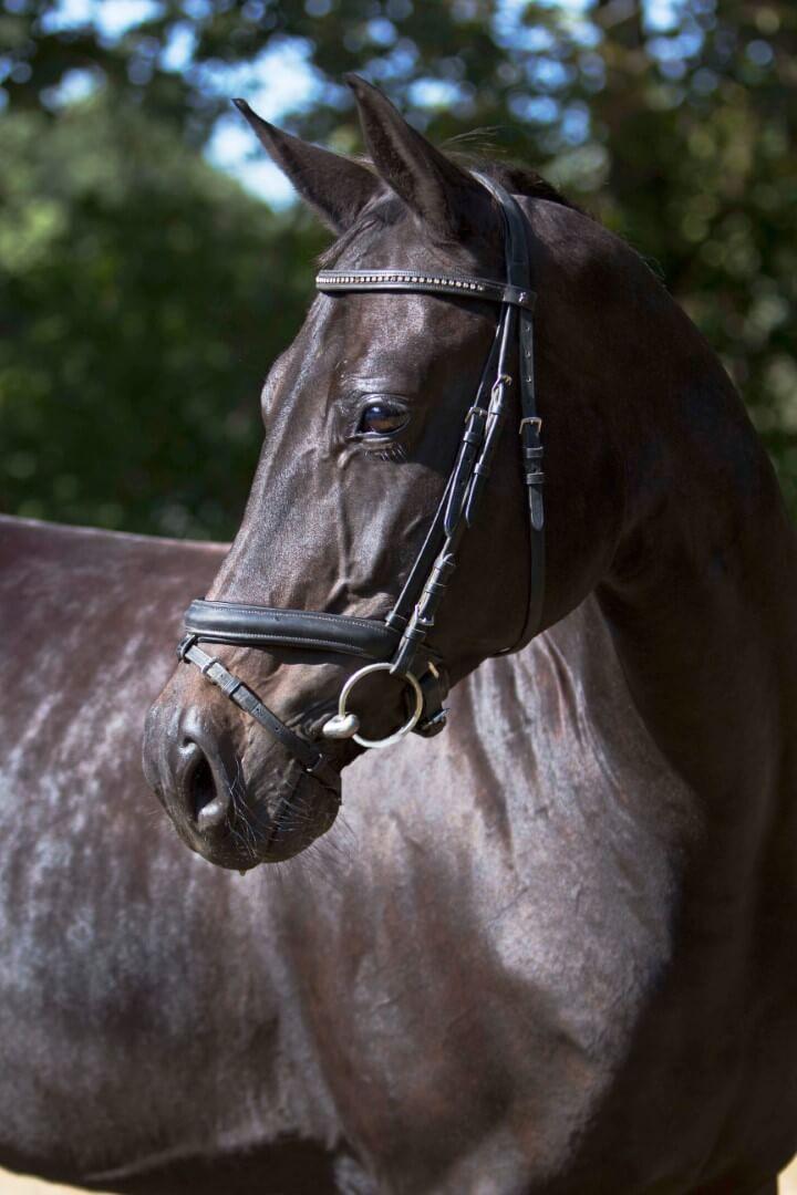 Waarom een paard